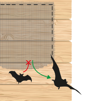 System that will allow the bats to leave their roost yet prevent them from getting back in.