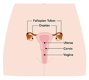 Cervical Cancer   Gouvernement du Qu  bec
