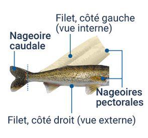 Illustration du filet en portefeuille : les 2 filets, gauche (vue interne) et droit (vue externe) conservent les nageoires pectorales et demeurent attachés à la nageoire caudale.