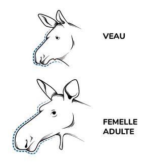 Illustration des profils d'un veau et d'une femelle orignal.