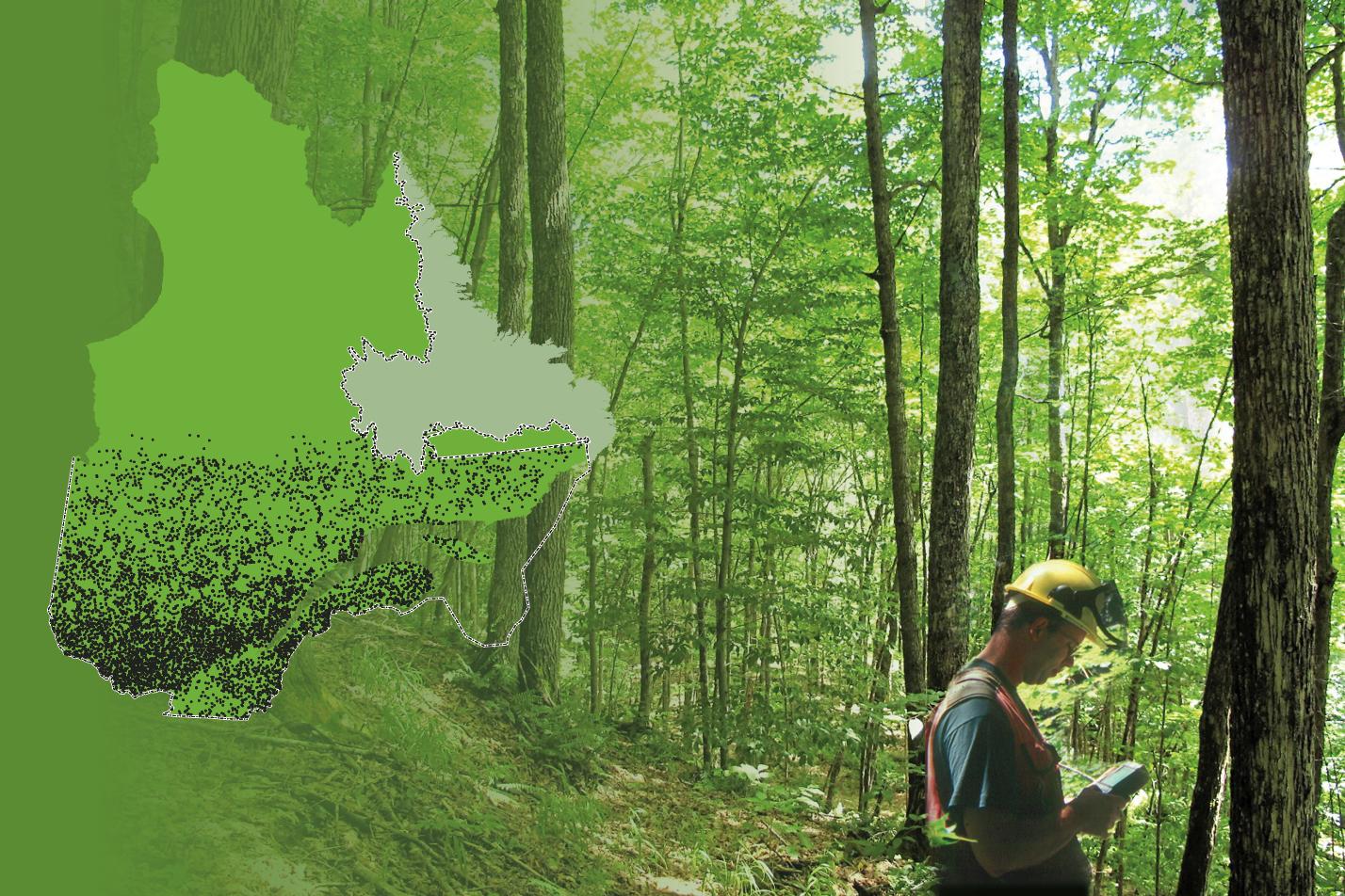 Un ingénieur forestier récolte des données dans une forêt.