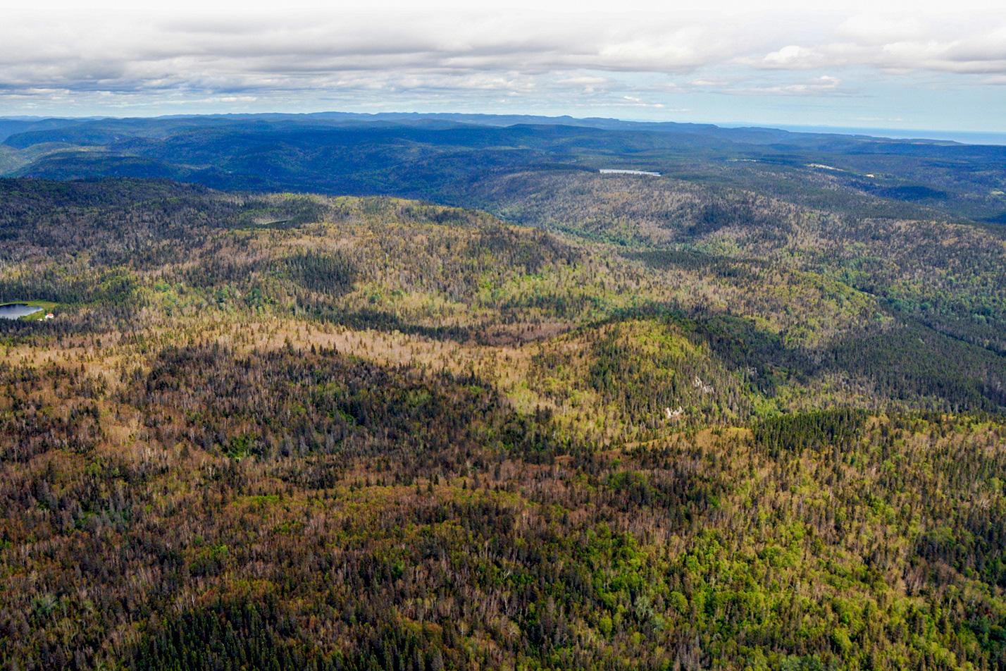 Publication du rapport « Insectes, maladies et feux dans les forêts du Québec en 2020 »