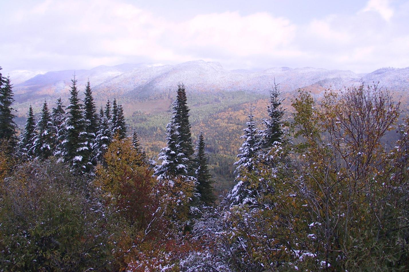 image d'une forêt aux couleurs d'automne sous un duvet de neige