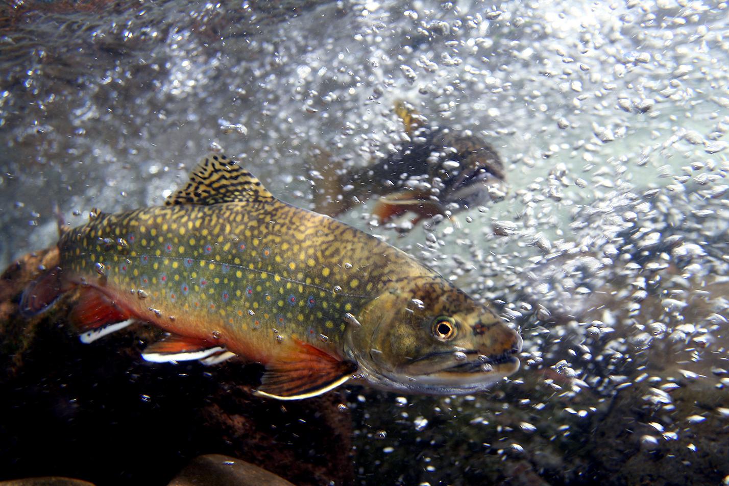 poisson dans l'eau et bulles