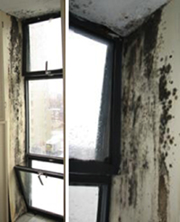 Mould in the corner of the windows