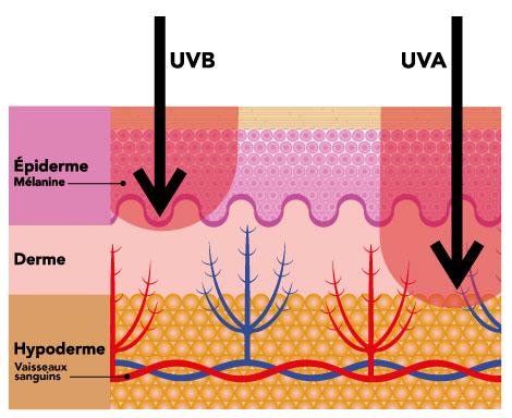 Pénétration des rayons UVA dans la peau.